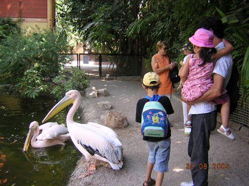 Pelican_hanashigai